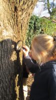 tree, observation, magnifying glass, field study, evidence