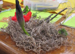 bird nest, birds, materials, Nature Detectives, nature, art, science