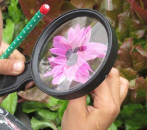 Nature Detectives, flowers, magnifying glass, student, observation