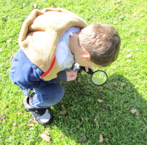 ladybugs, grasses, magnifying glass, observation,