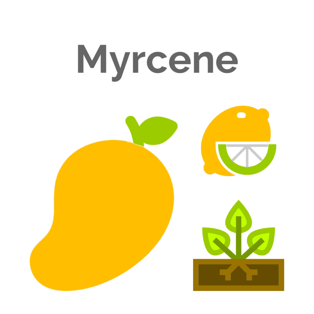 Myrcene is the primary terpene in Great White Shark