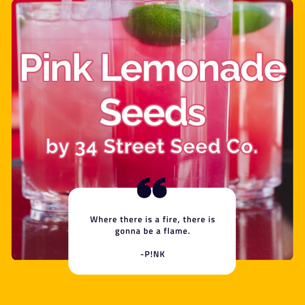 Grow your own Pink Lemonade this summer!