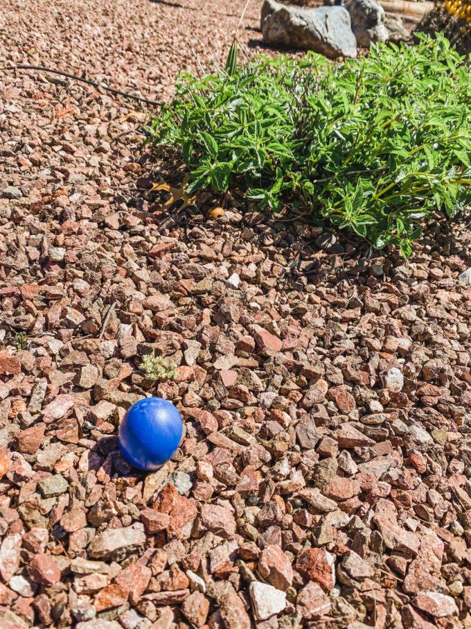 cascarones - confetti eggs in yard for scavenger hunt