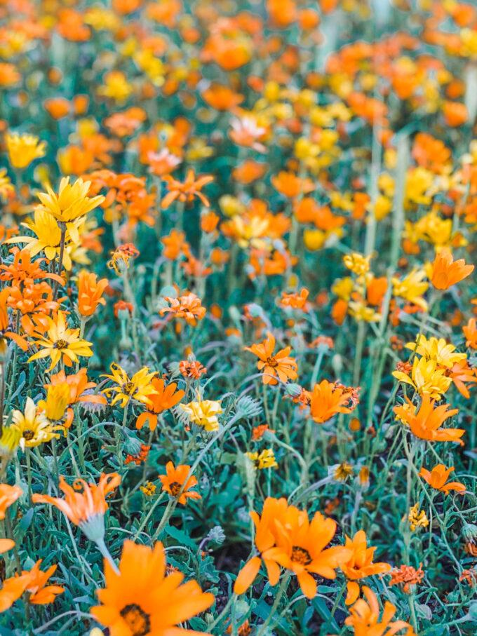 closeup of wildflowers