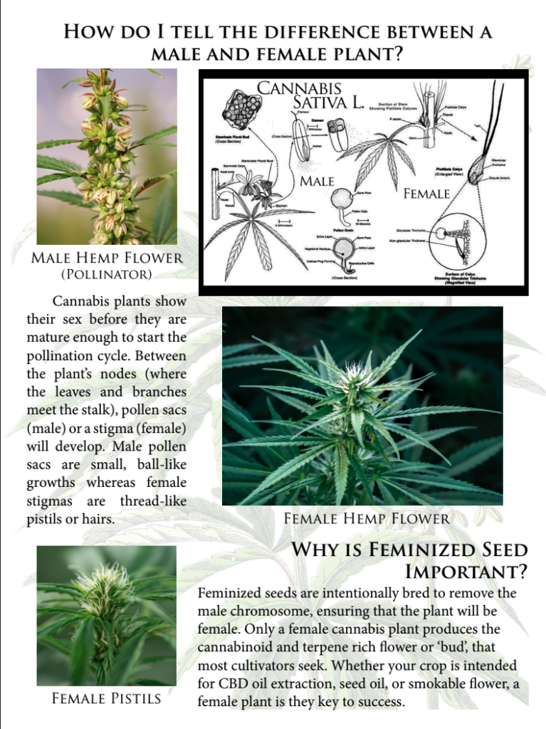 Example of Farmer's guide for Hemp Seed Sales and production
