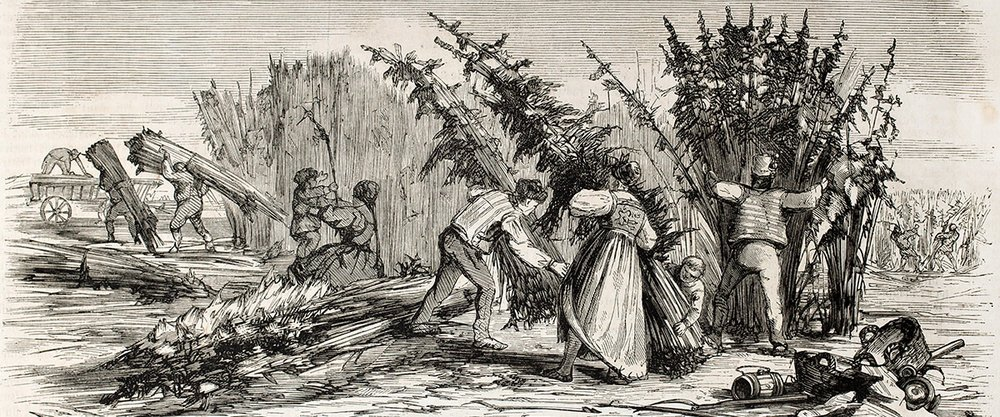 Drawing depicting the harvesting of a hemp crop