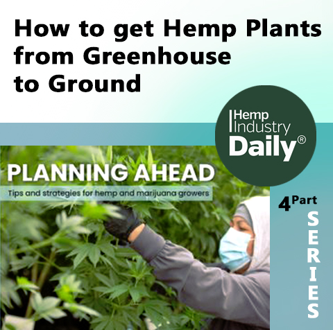 cover to hemp industry daily article how to get greenhouse plants into the ground