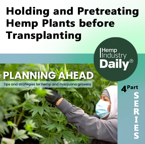 cover to hemp industry daily article how to hold and pretreat plants befroe transplanting