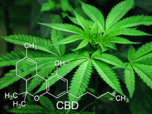 Under The Controlled Substances Act