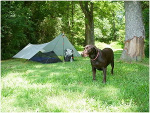 backpacking tent2