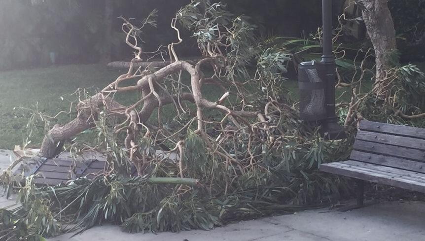 Fallen tree limbs hurricane irma update