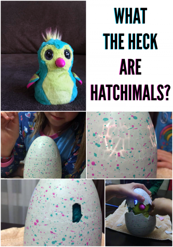 When Your Kid Loves Annoying Crap: All about how to get and hatch Hatchimals by @letmestart