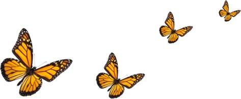 monarch-multiple