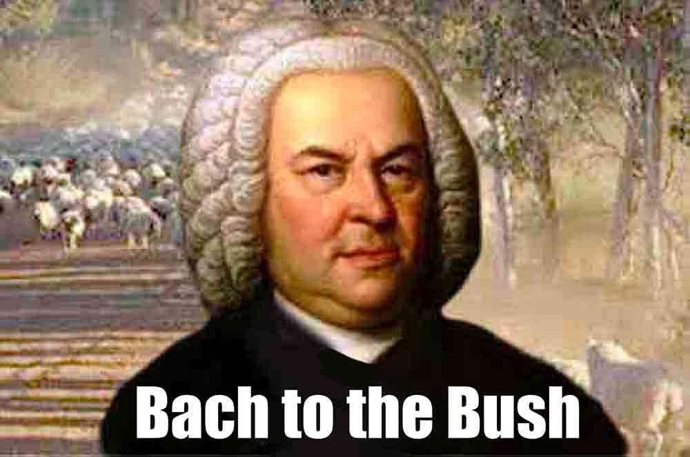 Bach-to-bush-opt