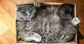 cat-in-box--horiz opt