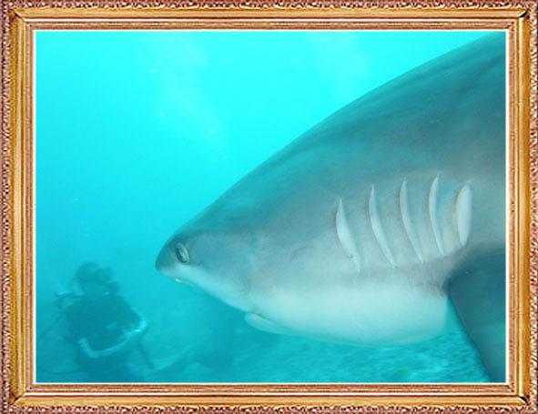 Steven-Dives-with-Sharks-55