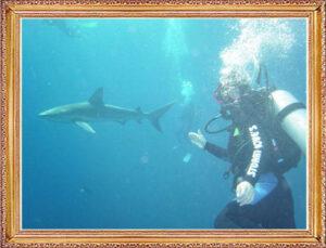 Steven Dives with Sharks