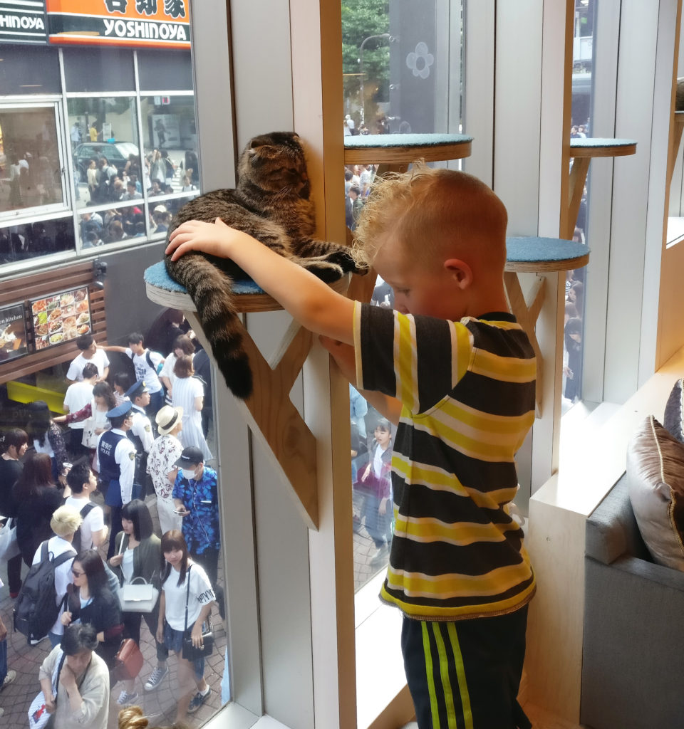 Cat Cafe in Tokyo with view of Takeshita Dori