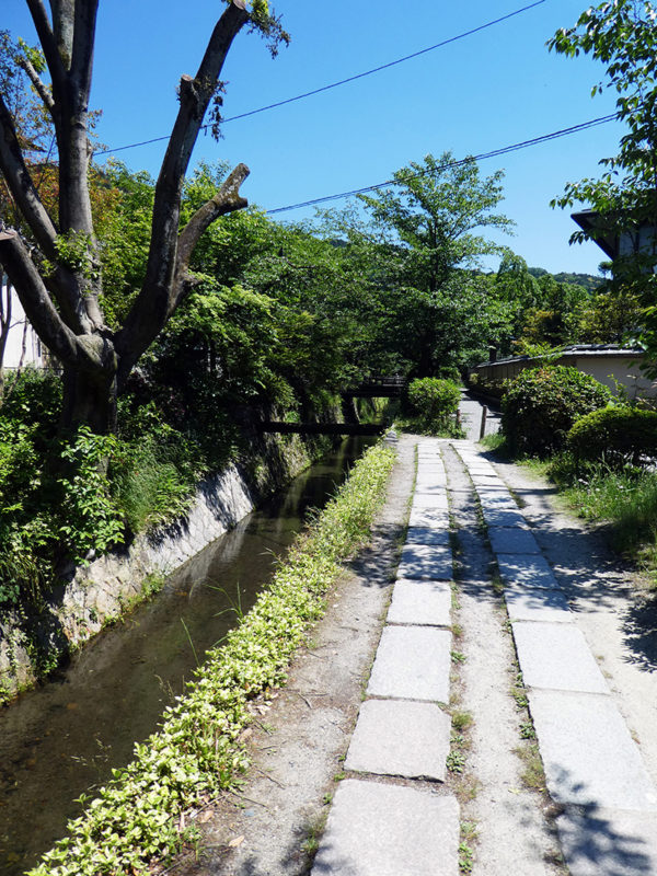 Philosopher's Path, Kyoto, Meditation, Artist, Trees, blooming, shrines, temples, diapersonaplane, Diapers On A Plane, traveling with kids, family travel