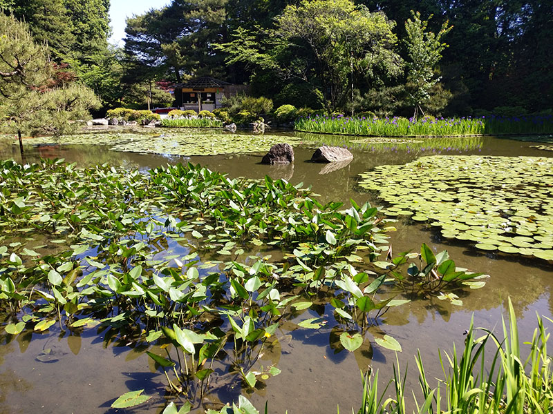 Heian Shrine, Shinto Shrine, Festival, Pond, Dragon Stones, Lily Pads, Fish, Turtles, Ducks, Garden, Family Travel, Traveling with Family, Diapers On A Plane, Diapersonaplane