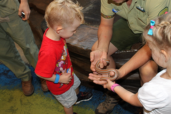 Holding snakes at the Rafiki's Planet Watch, one of the best attractions at Animal Kingdom