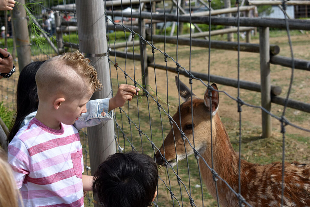 Deer Farm at Central Park Songdo with Kids in Incheon, Korea