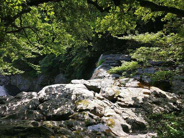 Tropical Jeju Forest Korea