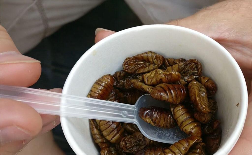 Eating Bugs in South Korea Beondegi Namdaemun Market Seoul Korea
