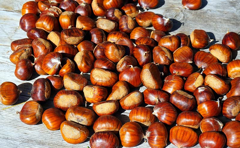 Chestnuts for the Bell Ringers