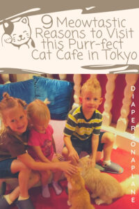 We loved our visit playing with the kitties at Cat Cafe Mocha in Harajuku. Located on Takeshita Dori, this is an easily accessible cat cafe and a great inclusion to your afternoon shopping and exploring. These are the very best reasons that you should visit a cat cafe in Tokyo.