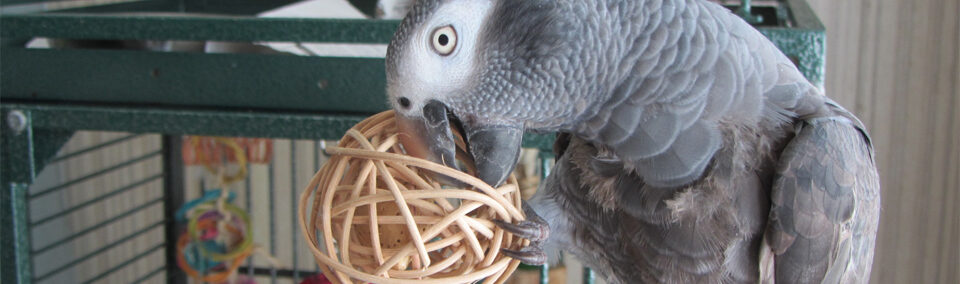 African Grey Care Housing Toys