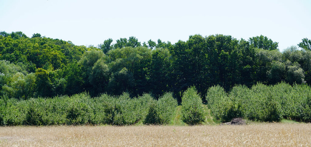 Rolling Orchard Hills at BrixStone Farms