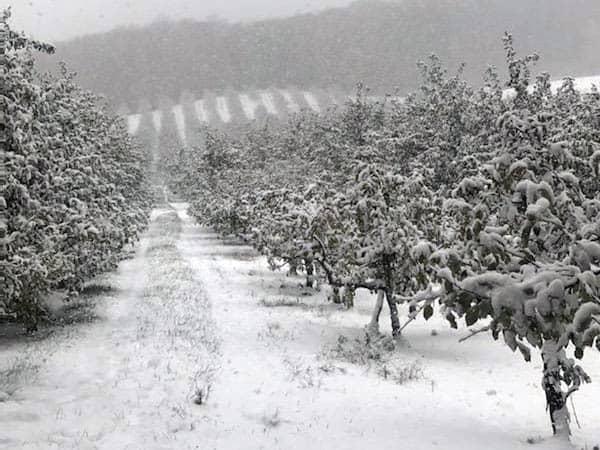 Winter at BrixStone Farms