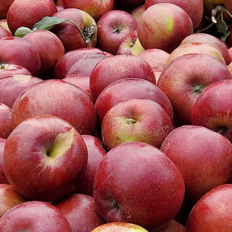 BrixStone Farms Fresh Apples