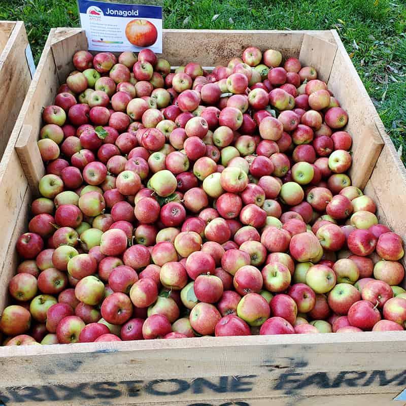 BrixStone Farms Jona Gold Apples