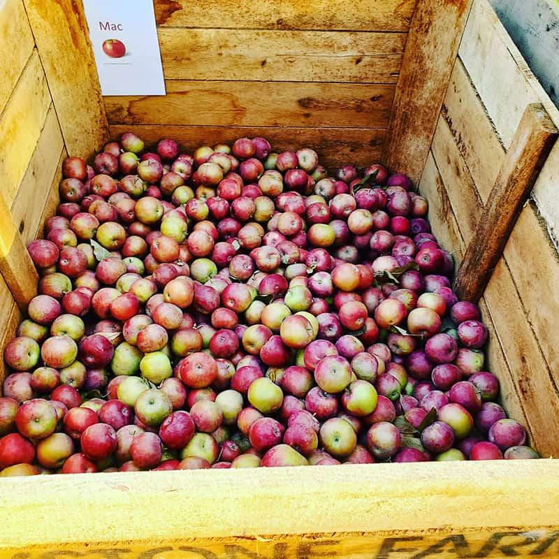 BrixStone Farms Macintosh Apples