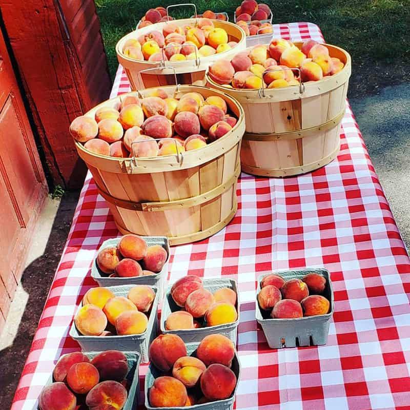 BrixStone Farms Peaches