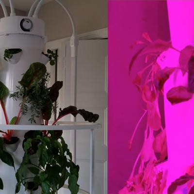 Indoor Gardening: Aeroponics Update & Compare