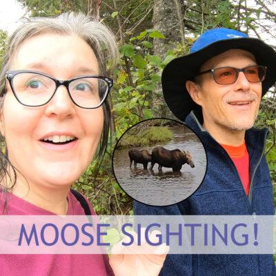 Isle Royale Moose Encounter!