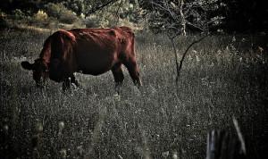 sustainable livestock