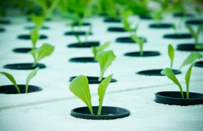 Hydroponics – What Is It And How It May Work For You