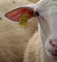 livestock regulations