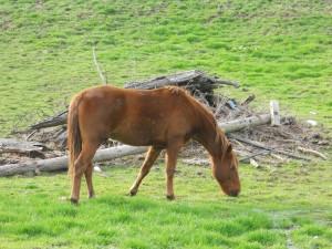 sustainable livestock nutrition