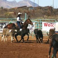 Livestock Handling Tips – Understanding Livestock Behavior