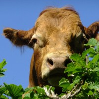 Top 5 Reasons to Eat Grass-Fed Meat