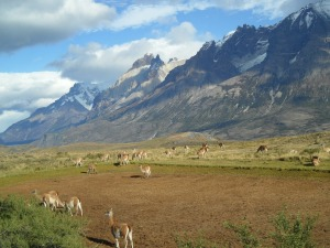 patagonia-303342_1280