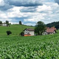 Homestead for Christmas – Raising & Caring for Livestock