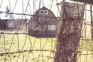 netting-wire-362168_1280