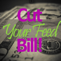 5 Ways to Cut your Cattle Feed Cost