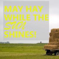 Make Hay While Sun Shines – Hay Silage & Animal Feed